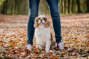 fotoshoot met hond-14