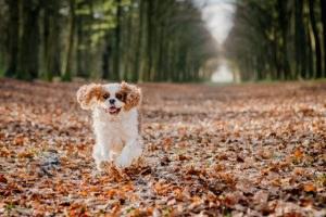 fotoshoot met hond-15