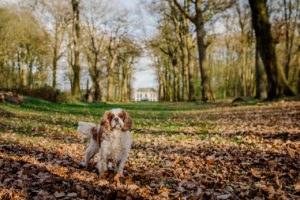 fotoshoot met hond-17