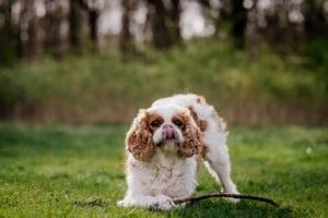 fotoshoot met hond-2