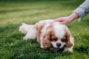 fotoshoot met hond-3