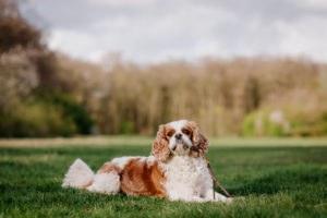 fotoshoot met hond-6