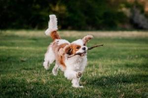 fotoshoot met hond-9